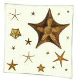 P1416-C   Starfish Decoupage Tray