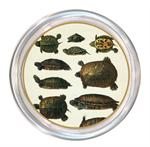C1439-Turtles Coaster