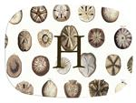 GB1403-Sand Dollars Personalized Glass Cutting Board