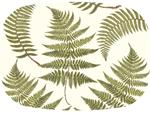 GB589-Ferns on Creme Personalized Glass Cutting Board