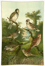 P198 - Brown Birds Decoupage Tray